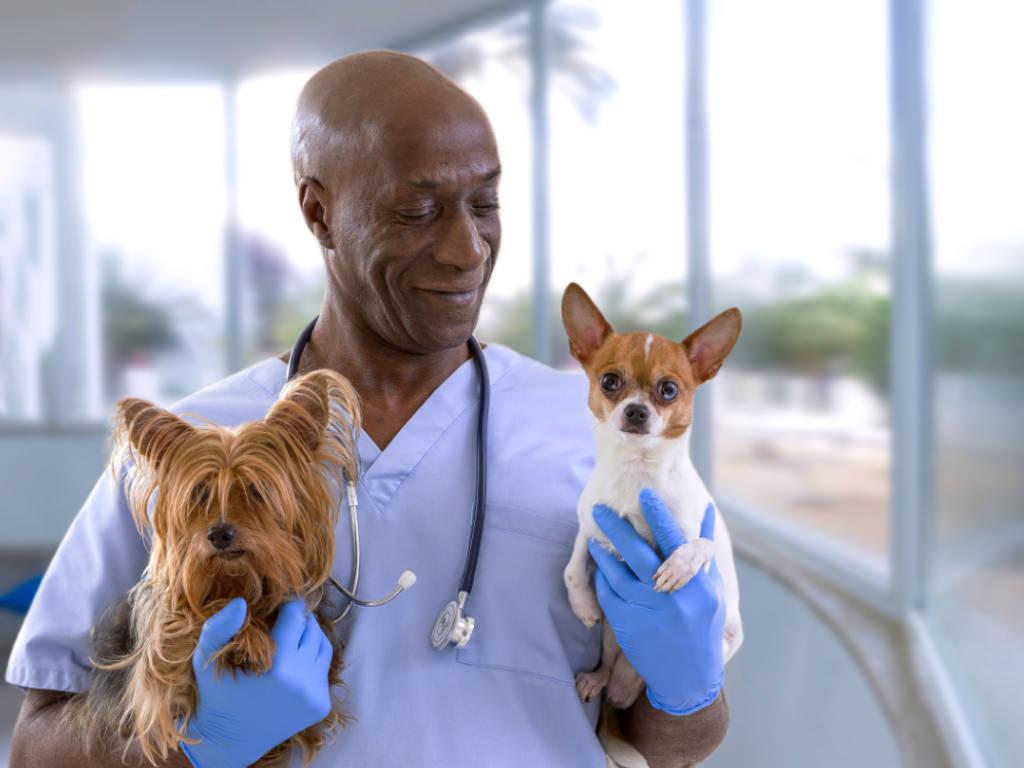 Atualmente a área de geriatria veterinária tem crescido de forma exponencial, gerado muito lucro para os empreendedores que investem nesta especialidade veterinária.  Segundo os dados levantados pela Labyes – empresa especialista…
