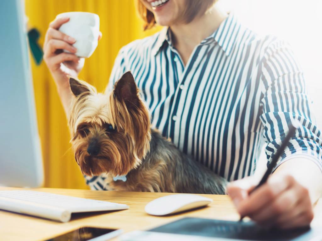 Realizar a gestão de qualidade para pet shops é de extrema importância para gerar crescimento para a sua empresa. Afinal, é através de uma boa gestão que você conseguirá alcançar…