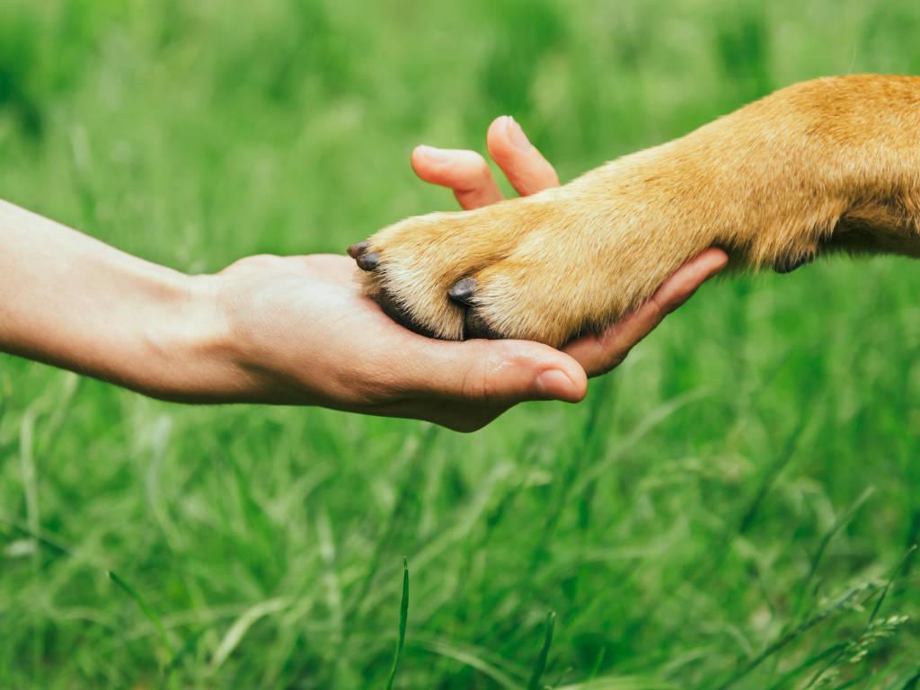 A sustentabilidade no mundo dos negócios, inclusive para clínicas veterinárias e pet shops, vem se tornado um tema cada vez mais importante para o sucesso dos empreendimentos.  Quando a empresa adota…