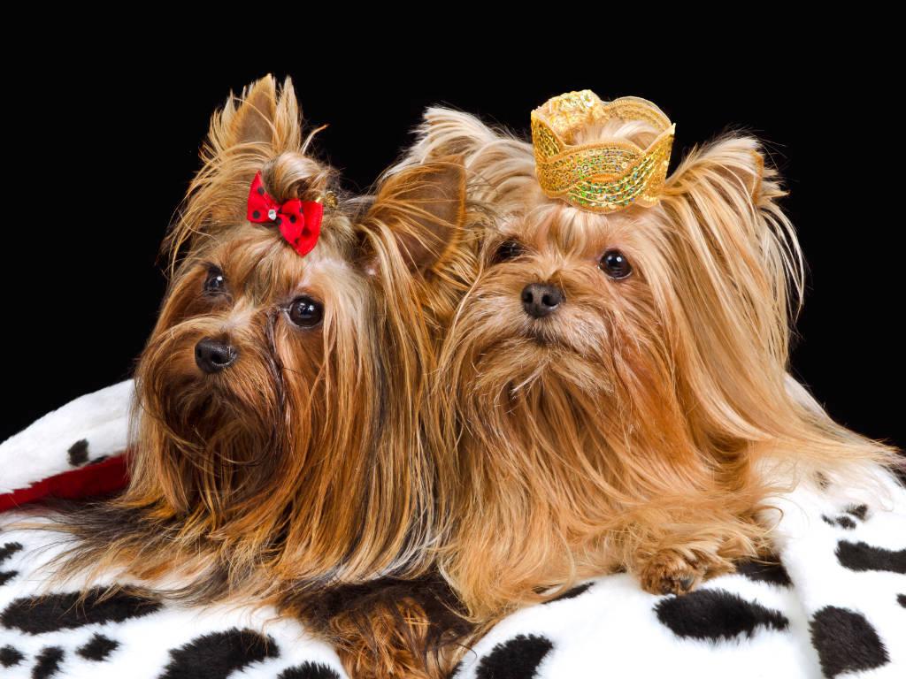 Saber como aproveitar o mercado de luxo para pets é uma ótima maneira de aumentar a lucratividade de seu negócio veterinário.  Com os donos de pets investindo cada vez mais em…