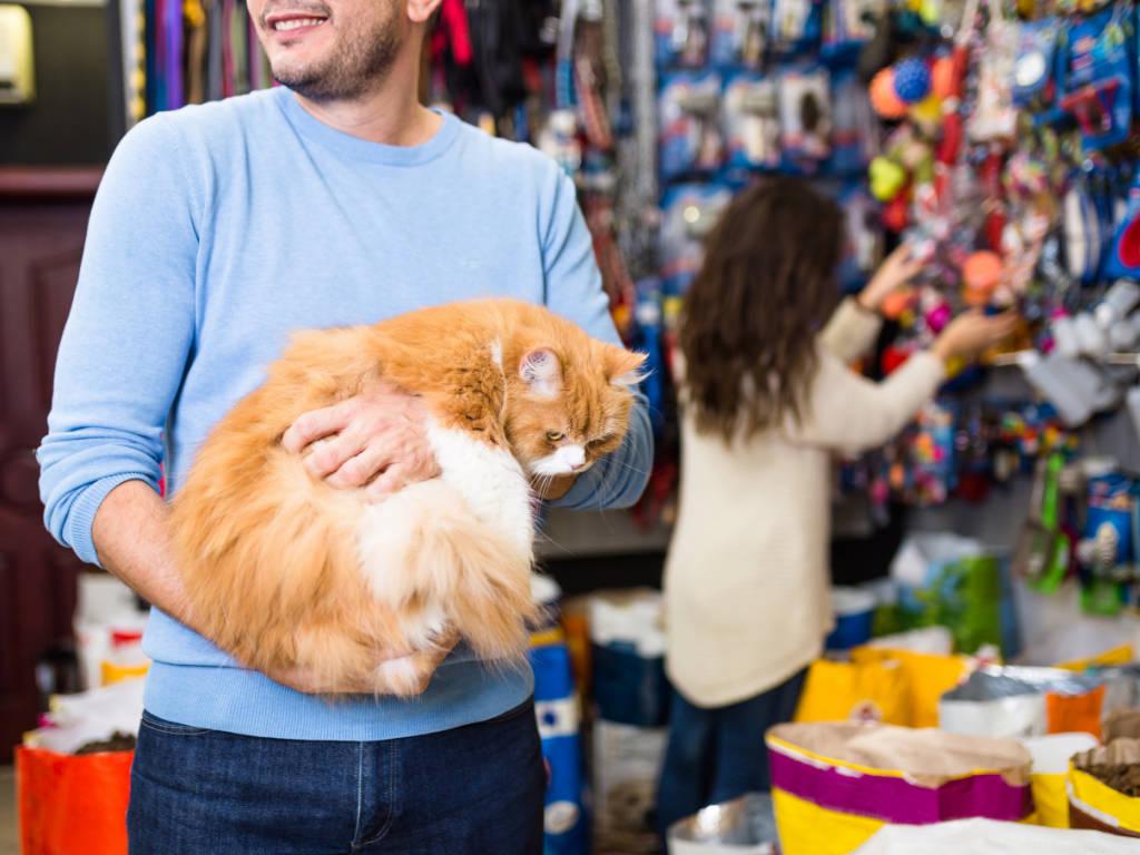 Quer lucrar mais em seu pet shop e conquistar novos clientes? Então você precisa apostar em produtos e serviços para gatos!  Isso porque a quantidade de felinos está crescendo e, consequentemente,…