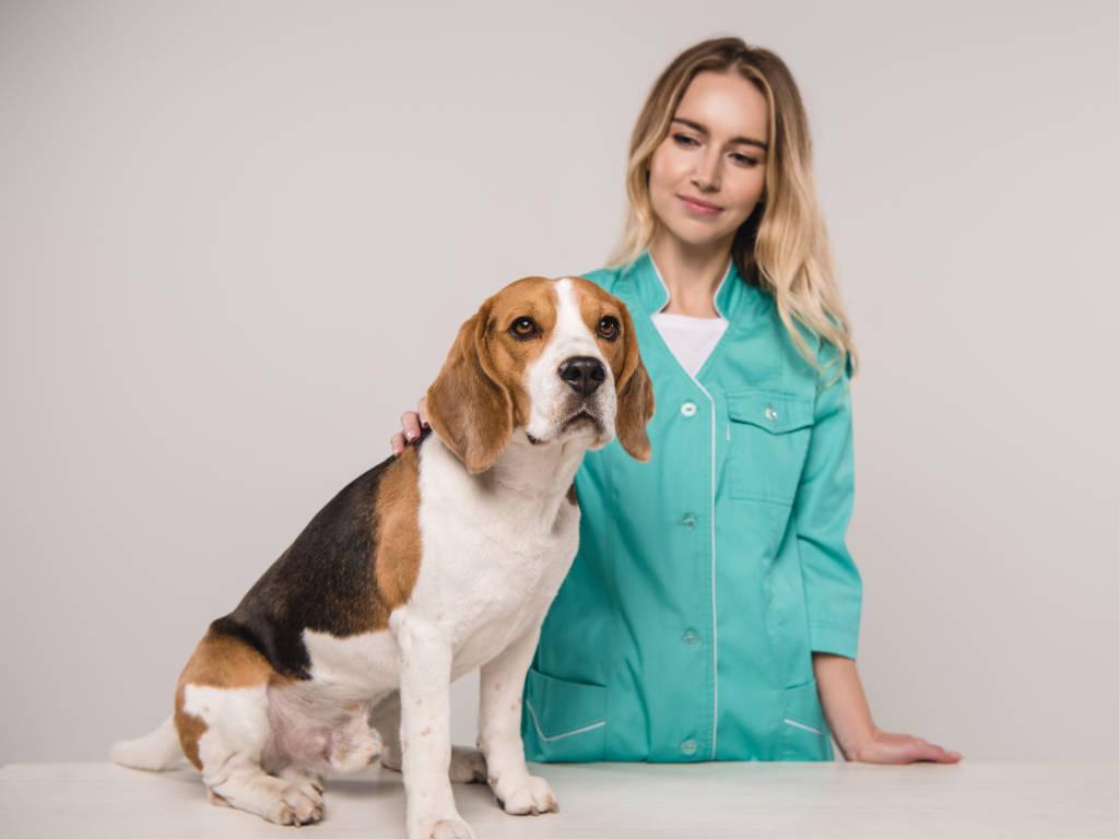Construir uma marca veterinária pessoal, criativa e potente é muito importante para o seu negócio ser bem-sucedido.  Mas nem todos, sejam eles veterinários ou empreendedores da àrea pet, sabem com clareza…